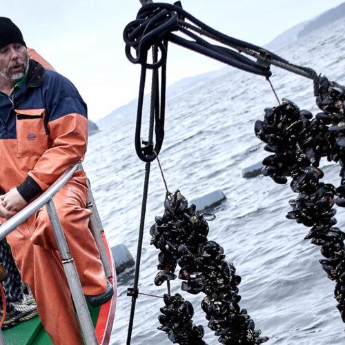 Musselodling Janne Bark Skördar Musselbaren