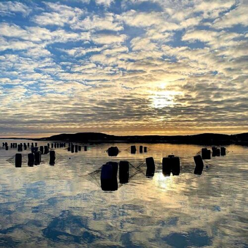 Musselodling Bohuslän Westsweden