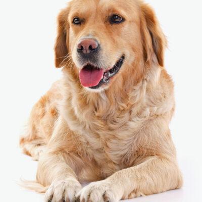 Hundvänligt Hotell Dog Pet Friendly Hotel